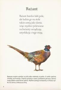 Fragment książki Dzieciaki, czy znacie ptaki